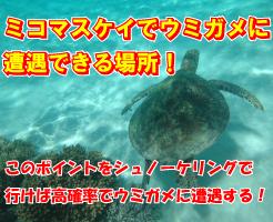 ミコマスケイのウミガメ遭遇場所