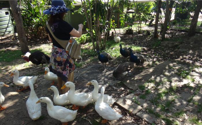 グラナイトゴージネイチャーパークの孔雀
