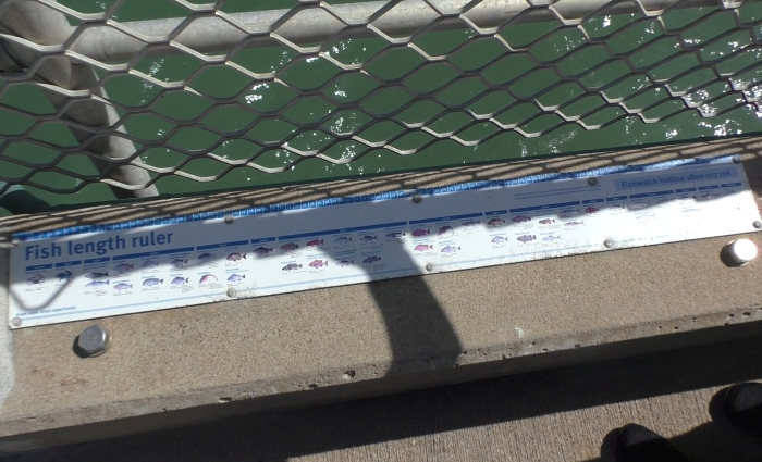 fish length ruler
