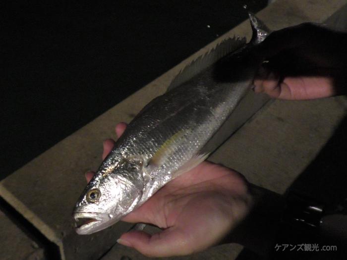 パームコーブの夜釣り